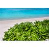 And the beaches of Okinawa main island / Ogimi plant (7) 218C8009